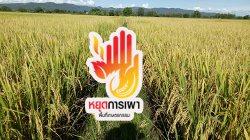 สารคดี ชุด หยุดการเผาบนพื้นที่เกษตรกรรม