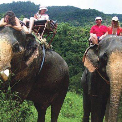 Damnern Saduak Floating Market , Elephant riding Elephant bathing and Bamboo rafting (Code 1006)