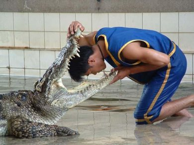 Floating Market and the Crocodile Farm (Code 1003)