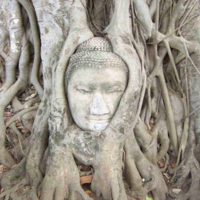 Ayutthaya By Coach and back by Boat (Code 1022)