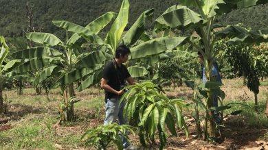 โครงการลดโลกร้อน จากการลดการเผาบนพื้นที่การเกษตรกรรมในประเทศไทย