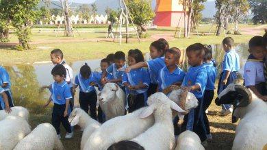 โรงเรียนวัดป่าตึงห้วยยาบ เข้าทัศนศึกษาที่ดัชฟาร์ม จำนวน 22คน