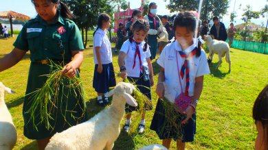 โรงเรียนวัดเปาสามขา เรียนรู้วิถีการเลี้ยงม้าและความเป็นอยู่ของสัตว์ในดัชฟาร์ม