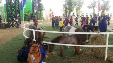 โรงเรียนบ้านมะเขือแจ้ ยกขบวนตะลอนทัวร์ มาชมม้าแคระที่ดัชฟาร์ม
