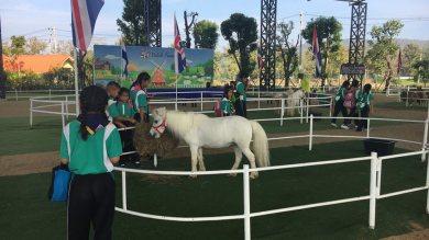 โรงเรียนแม่ปูคา มาเยี่ยมม้าแคระ แกะน้อย แล้วนะ