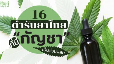 """16 ตำรับยาไทย ที่มี """"กัญชา"""" เป็นส่วนผสม"""