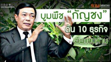 """บูมพืช """"กัญชง"""" ดัน 10 ธุรกิจอัพแสนล้าน"""