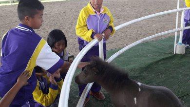 โรงเรียนบ้านทุ่งข้าวพวง เข้าชมฟาร์ม สัมผัสม้าแคระแบบใกล้ชิด