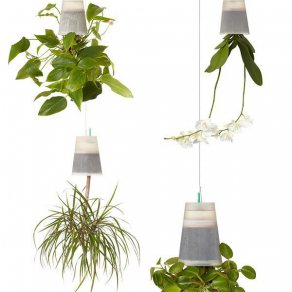 หมวด  สวนแนวดิ่ง (upside down gardening)