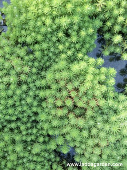 water plants japan