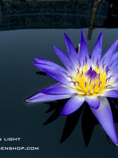 Blue Vergin Light
