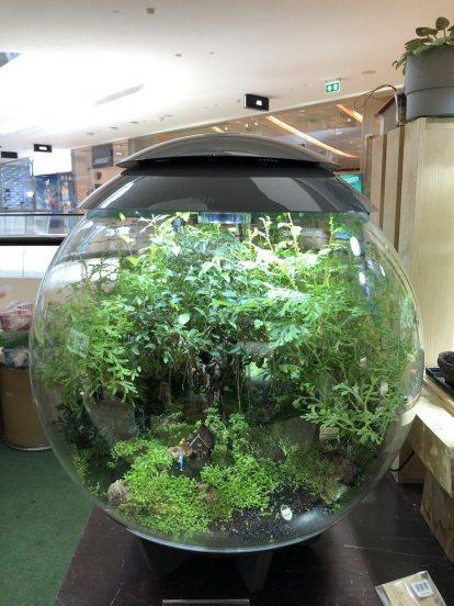 บริการรับจดสวนในขวดแก้วจำลอง