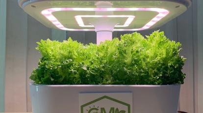 เทคโนโลยีการปลูกพืชกินได้ในอาคาร