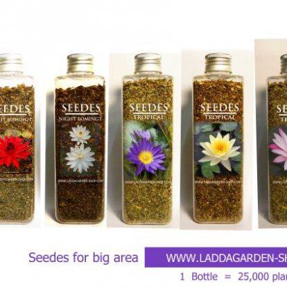 หมวด เมล็ดพันธุ์ไม้ดอก-ไม้ประดับ (Seedsflowering - ornamentalplants)