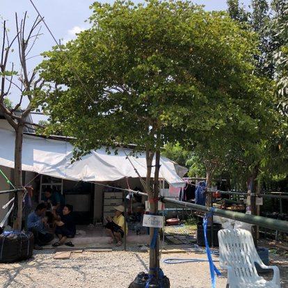 หมวด ต้นไม้ใหญ่สำหรับตกแต่งสวน (ฺBig tree decorative)