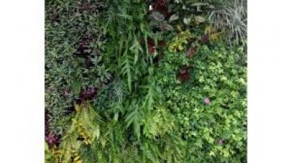 ปลูกสวนแนวตั้งอย่างไรให้งามและทนอยู่ได้หลายปี