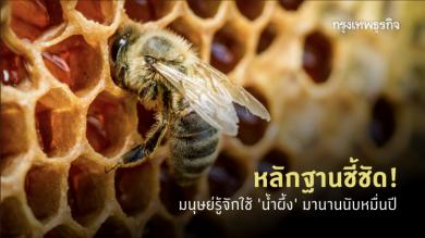 เปิดหลักฐาน! มนุษย์รู้จัก 'น้ำผึ้ง' มาตั้งแต่ก่อนประวัติศาสตร์