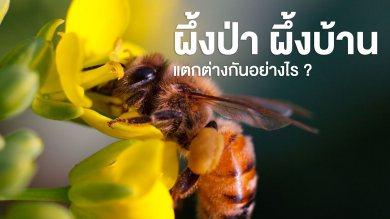 น้ำผึ้งป่าและน้ำผึ้งเลี้ยงแตกต่างกันอย่างไร