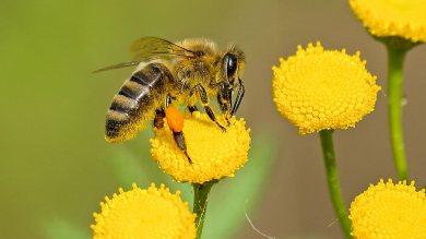 สรรพคุณของน้ำผึ้งในการใช้น้ำผึ้งเป็นอาหารและยา