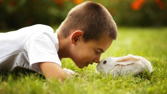 สัตว์และสิ่งมีชีวิต