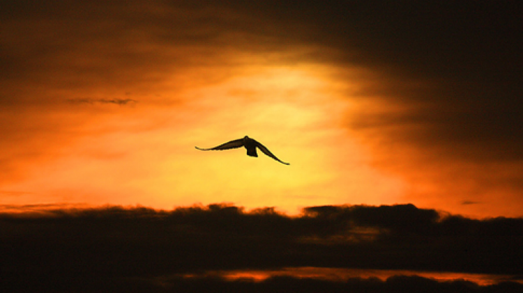 นกไม่มีขน คนไม่มีเพื่อน ย่อมขึ้นที่สูงไม่ได้