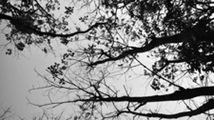 ต้นไม้ที่ไม่ได้รับแสงแดด ผลคือรอวันตาย
