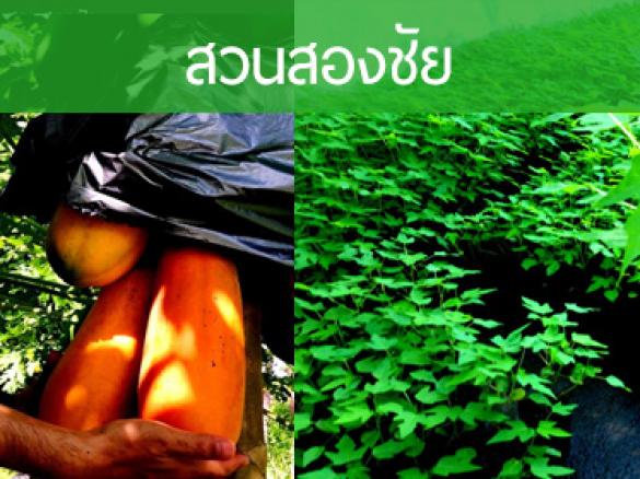 www.papaya-2chai.com